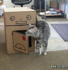 Como hacer cama casita gimnasios para gato construir rascador c mo se hacen juguetes caseros - Casas para gatos baratas ...