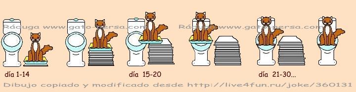 Como enseñar al gato usar inodoro (WC)