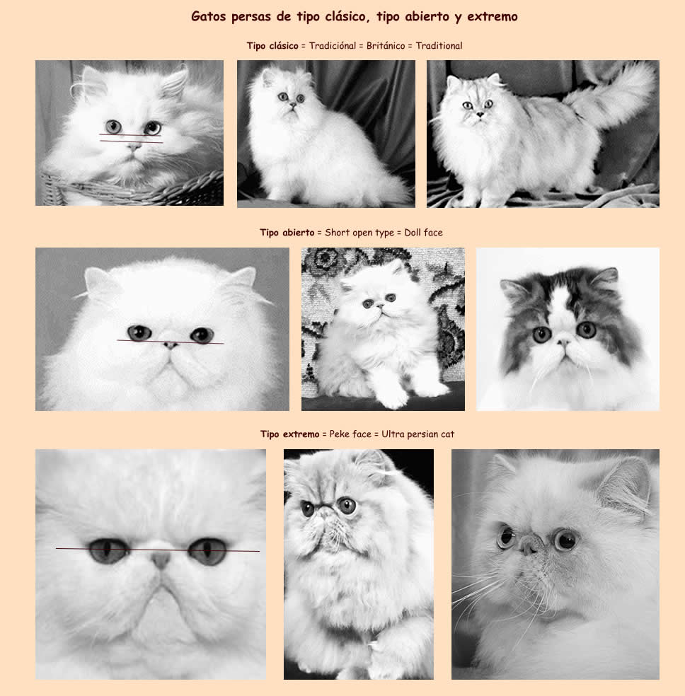 Extremo largo labios de gatito