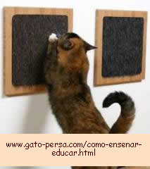 educar gatos