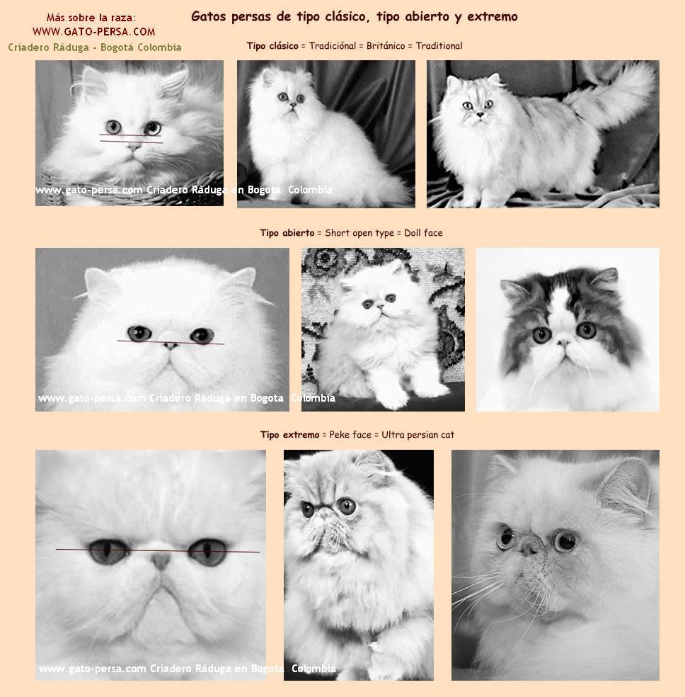 Mapa de la página de gatos persas en Bogota Ráduga